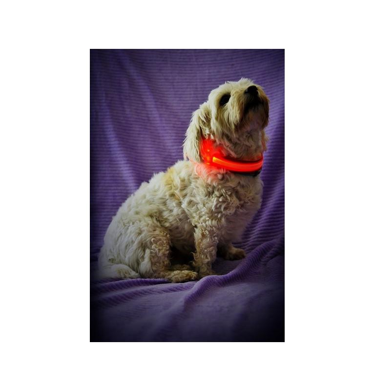 Svítící obojek pro psy